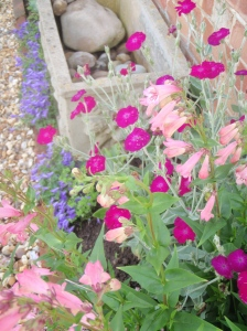 Creative, colourful combinations in a country cottage garden!